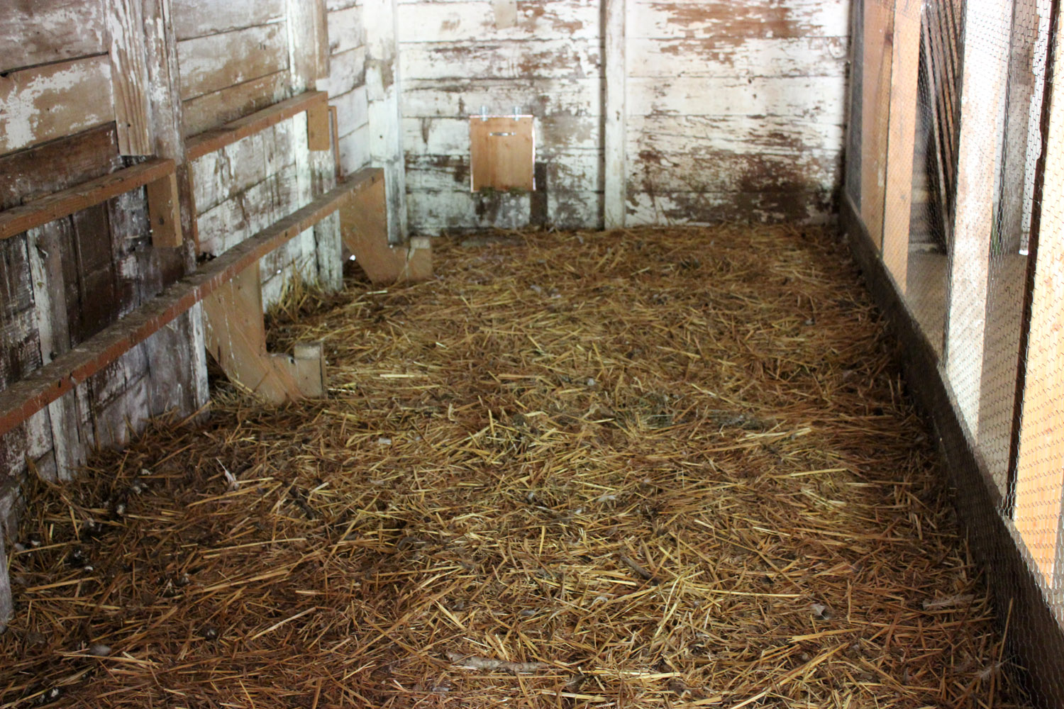 Chicken Coop Bedding: Using Pelleted Shavings