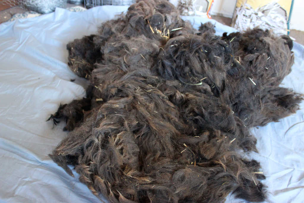 Raw Brown Black Alpaca Fiber