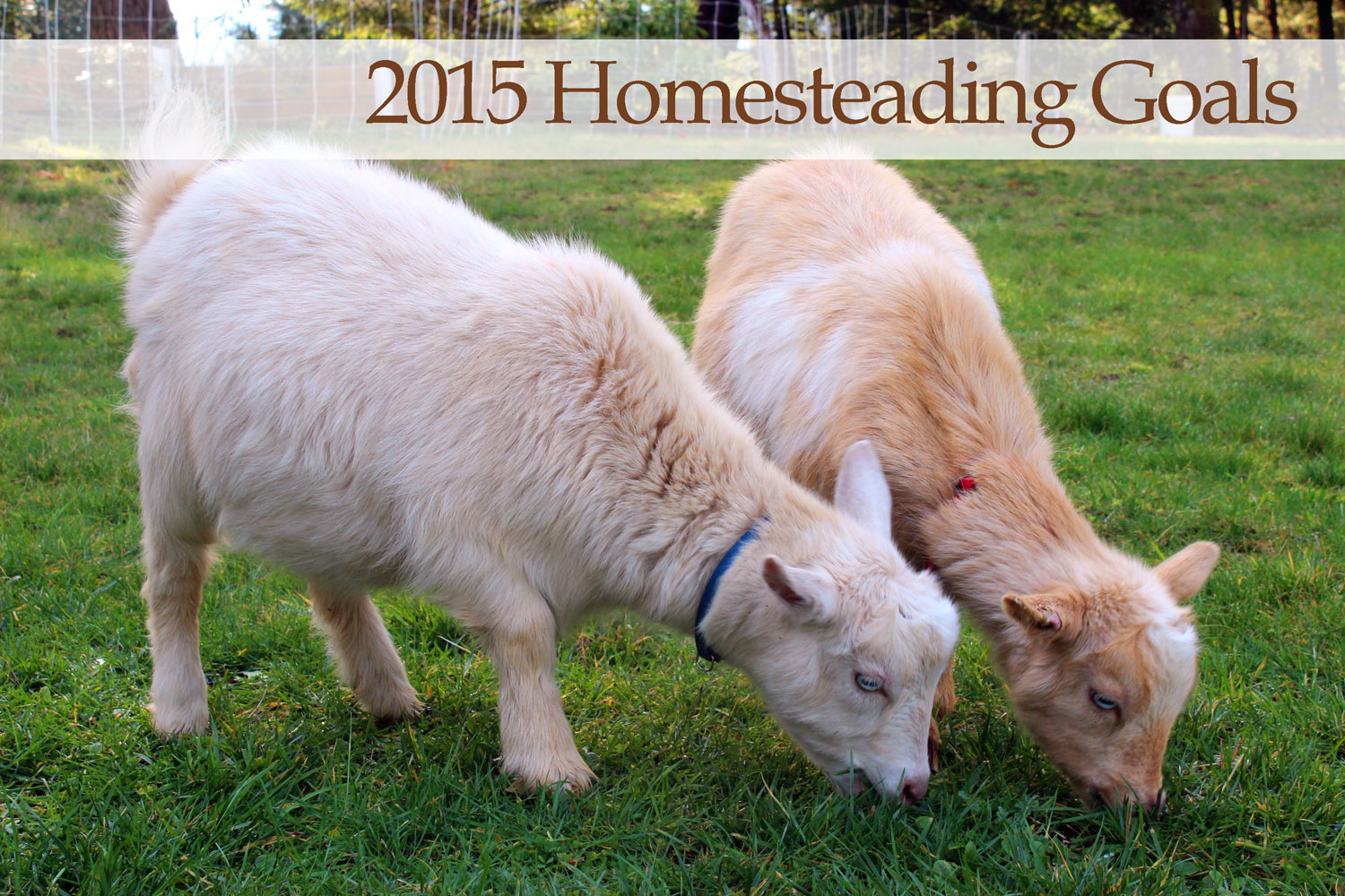 Homesteading Goals for 2015