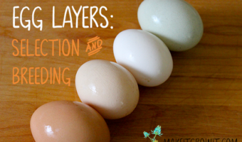 egg layers: selection and breeding