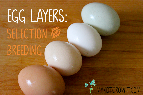egg layers - selection and breeding