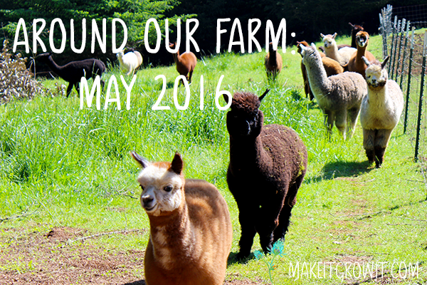 Around Our Farm: May 2016