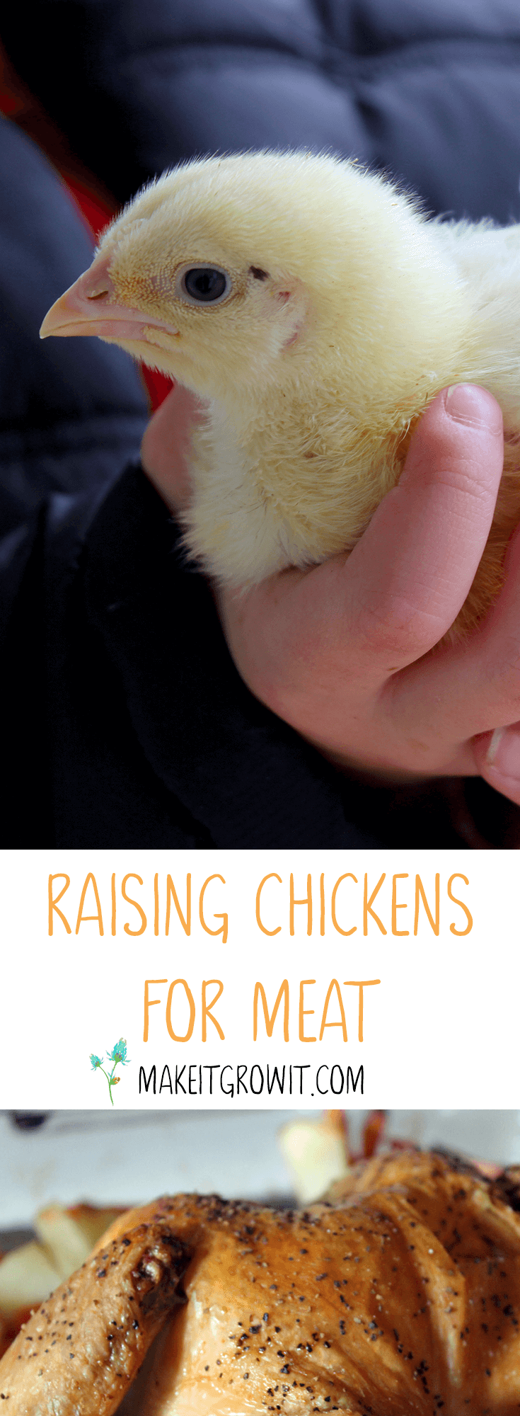 Raising Chickens for Meat by Make It. Grow It. - A quick guide to selecting, brooding, and raising healthy, happy chickens for meat. Click through to read the guide or Pin It to save for later.