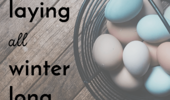 how to keep your chickens laying all winter long